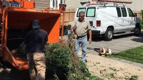 Bronx Tree Chipping Cutting