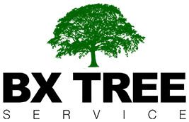Tree Service in Bronx