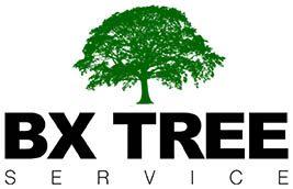 Tree Service in Bronx